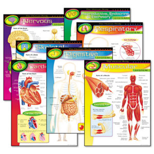TREND® Learning Chart Combo Pack